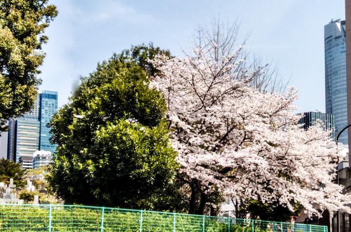 春-1.jpg