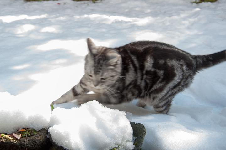 雪ネコ 1.jpg